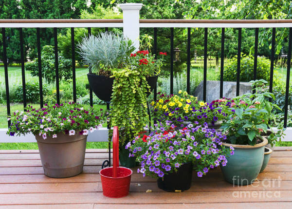 Wall Art - Photograph - Pots Of Flowers On A Suburban Deck by William Kuta