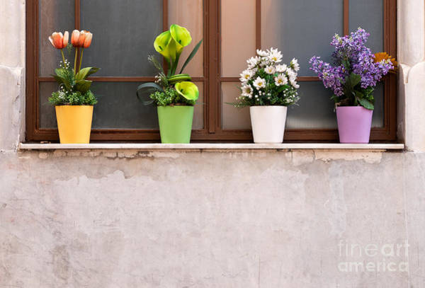Photograph - Potted Flowers 01 by Rick Piper Photography
