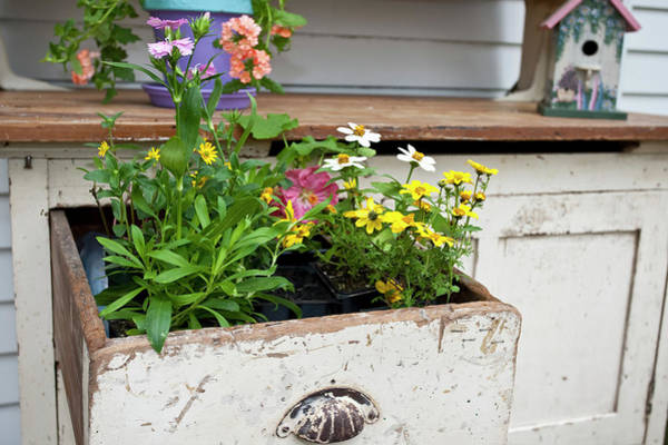 Annual Photograph - Potting Bench With Flowers In Spring by Richard and Susan Day