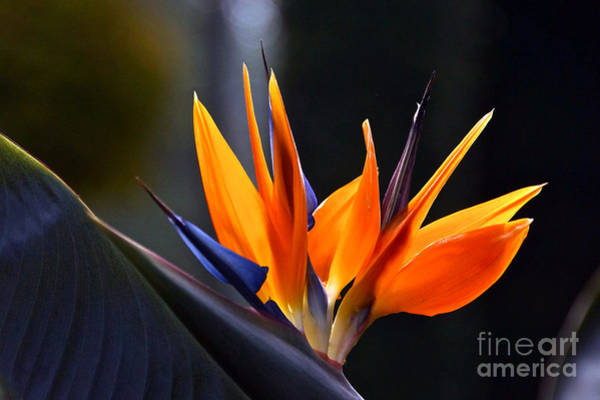 Photograph - Power Flower by Byron Varvarigos