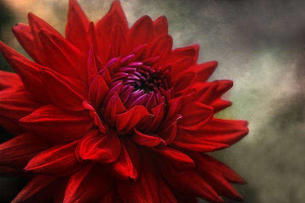 Wall Art - Photograph - Power Of Flower by Joachim G Pinkawa