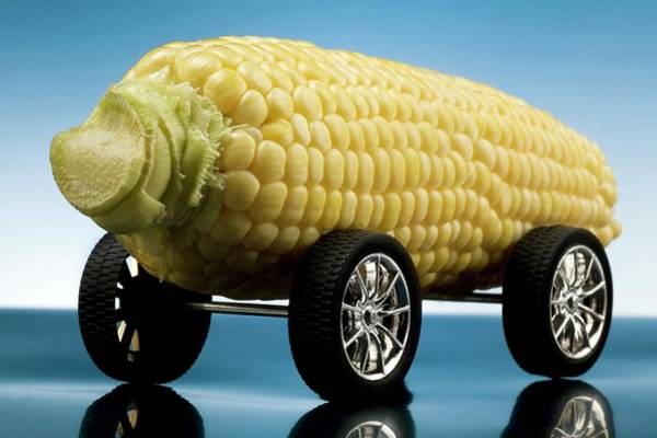 Wall Art - Photograph - Powering Vehicles With Biofuels by Steve Percival/science Photo Library