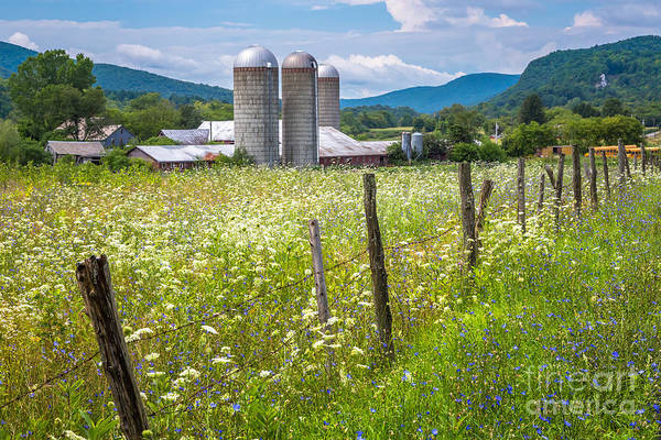 Photograph - Pownal Vermont Summer Meadow by Susan Cole Kelly