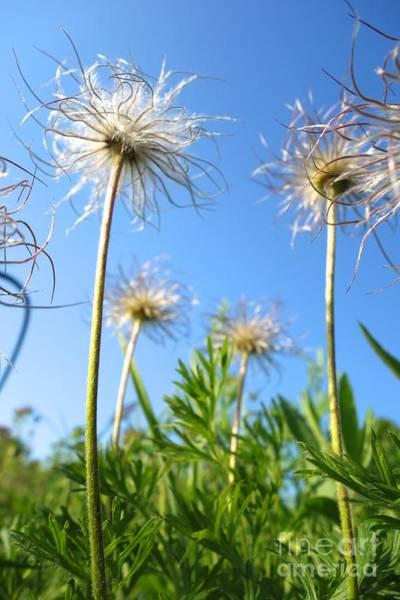 Photograph - Prairie Flower #2 by Jacqueline Athmann