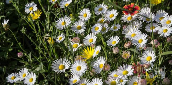 Photograph - Prairie Flowers by Jim McCain