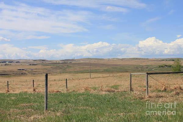 Photograph - Prairie Grass And Sky by Donna L Munro