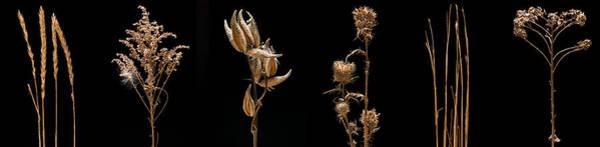 Wall Art - Photograph - Prairie Plant Life by Steve Gadomski