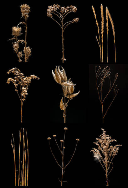 Wall Art - Photograph - Prairie Plant Still Life by Steve Gadomski