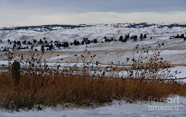 Photograph - Prairie Snow by Linda Shafer