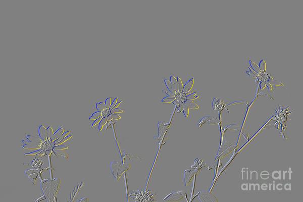 Photograph - Prairie Sunflowers by Jim West
