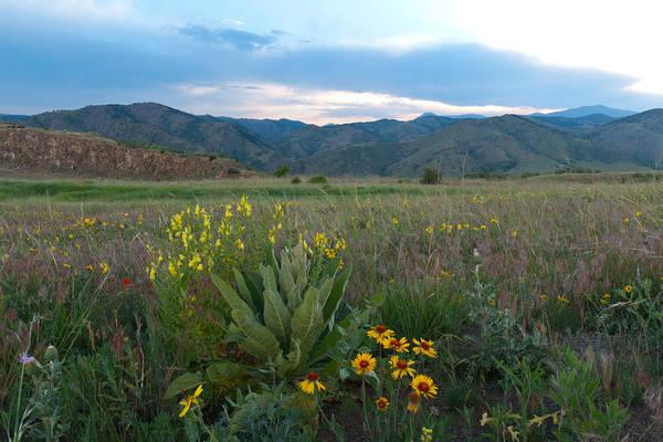 Photograph - Prairie Wildflower Landscape by Cascade Colors