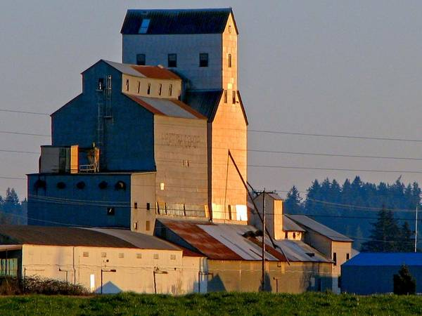 Photograph - Pratum Co-op Willamette Valley by Lora Fisher