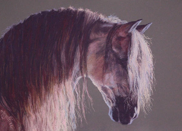 Andalusian Stallion Wall Art - Painting - PRE by Ann Jeffree