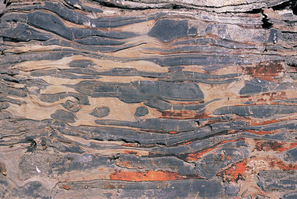Carbonate Photograph - Precambrian Stromatolites by Sinclair Stammers/science Photo Library