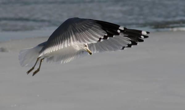 Water Birds Wall Art - Photograph - Precious Flight by Valia Bradshaw
