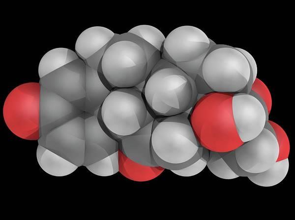 Compound Photograph - Prednisone Drug Molecule by Laguna Design/science Photo Library