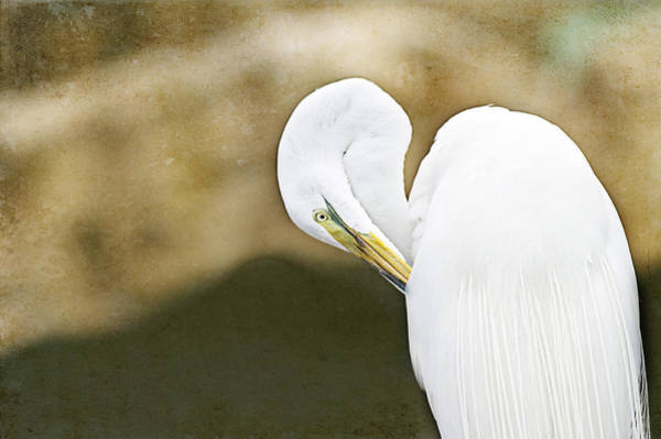 Wall Art - Photograph - Preening by Rebecca Cozart