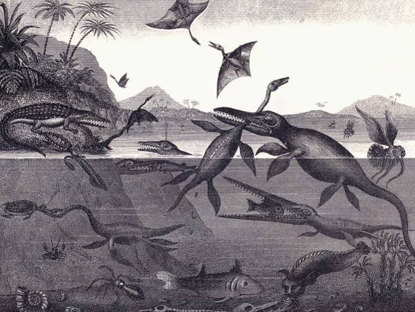 English Coast Wall Art - Drawing - Prehistoric Animals Of The Lias Group by English School