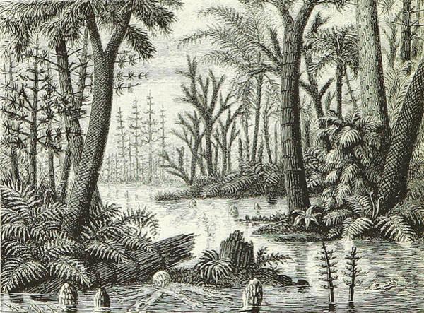 Photograph - Prehistoric Flora, Carboniferous by British Library