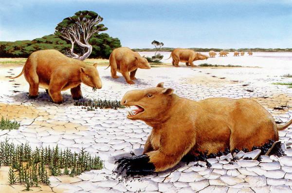Paleozoology Wall Art - Photograph - Prehistoric Giant Wombats by Deagostini/uig