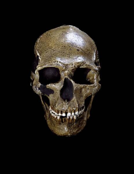 Homo Sapiens Photograph - Prehistoric Human Skull (predmosti 3) by Natural History Museum, London/science Photo Library