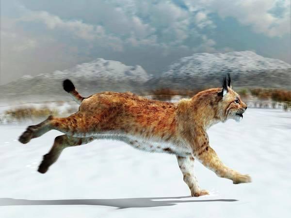 Iberian Peninsula Wall Art - Photograph - Prehistoric Iberian Lynx by Jose Antonio Pe�as