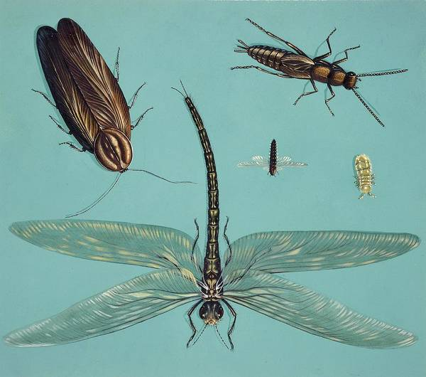 Odonata Photograph - Prehistoric Insects by Deagostini/uig