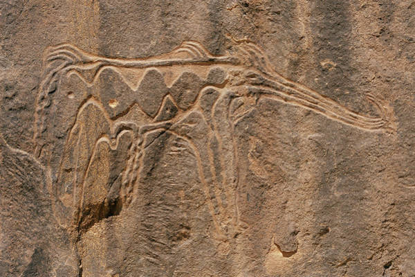 Petroglyph Photograph - Prehistoric Petroglyph by Sinclair Stammers/science Photo Library