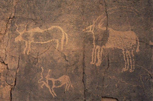Sahara Photograph - Prehistoric Petroglyphs by Sinclair Stammers/science Photo Library
