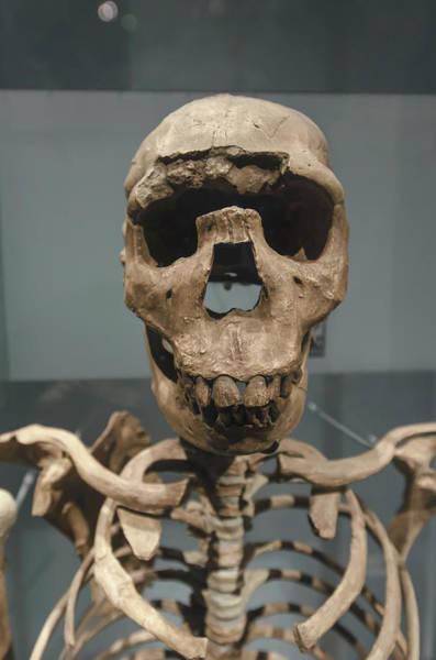 Wall Art - Photograph - Prehistoric Skeleton by Ktsdesign/science Photo Library