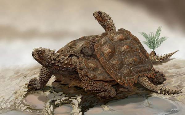 Turtle Photograph - Prehistoric Turtles by Jaime Chirinos/science Photo Library