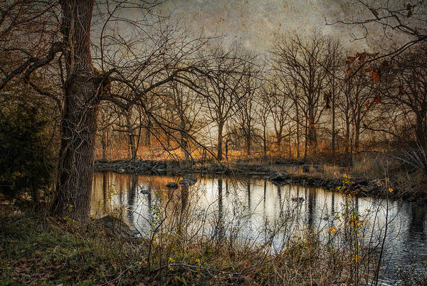 Photograph - Prelude To Winter by Robin-Lee Vieira