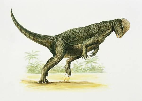 Cretaceous Wall Art - Photograph - Prenocephale by Deagostini/uig/science Photo Library