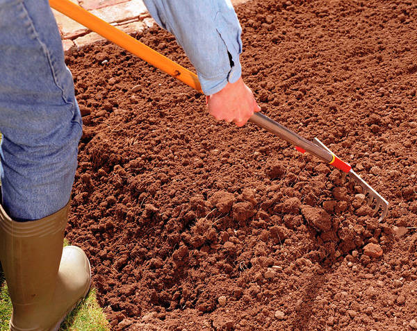 Soil Science Wall Art - Photograph - Preparing Soil by Science Photo Library