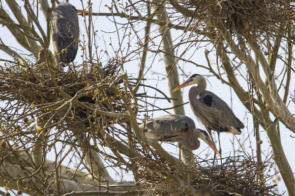 Photograph - Preparing The Nest by Jack R Perry