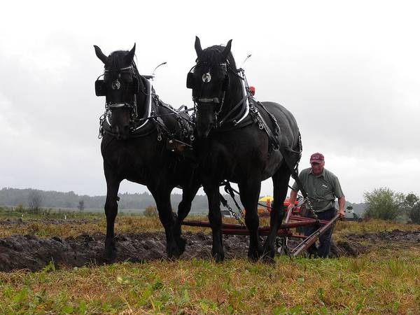 Photograph - Prescott County Plowing Match by Peggy  McDonald