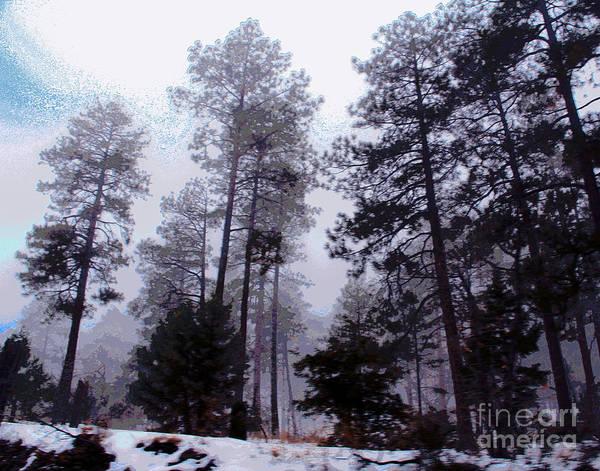 Photograph - Prescott Trees by Larry Oskin