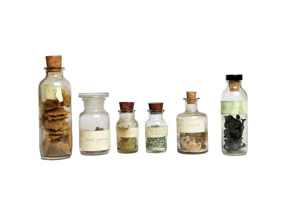 Preservation Photograph - Preserved 19th Century Specimens by Gregory Davies