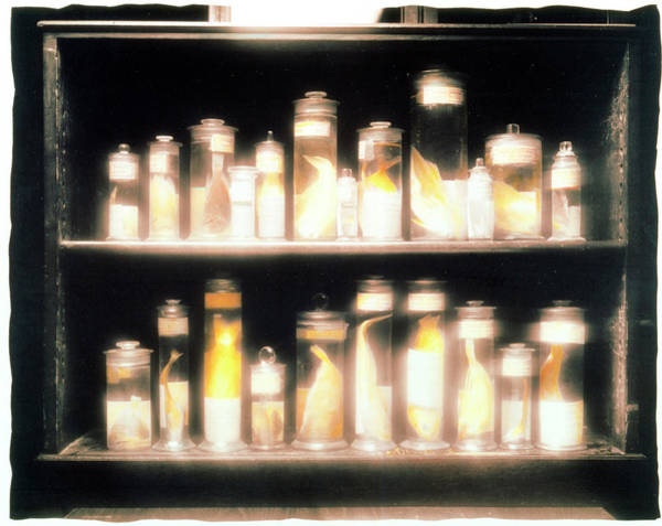 Evolution Photograph - Preserved Fish Specimens Gathered By Darwin by Frances Evelegh/science Photo Library