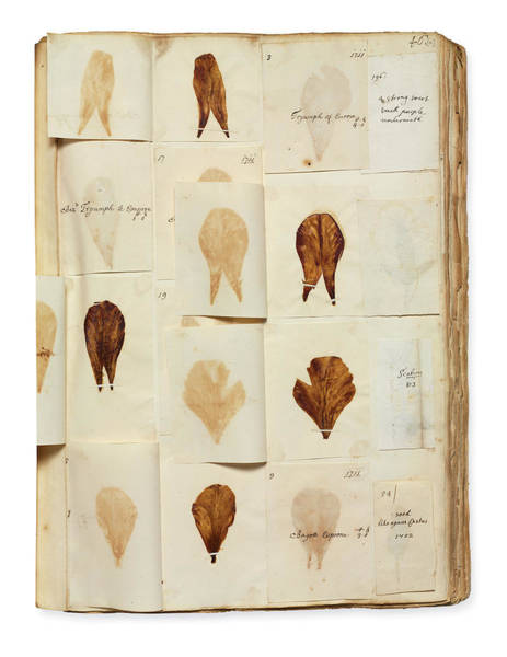 Angiosperm Photograph - Pressed Tulip Specimens by Natural History Museum, London