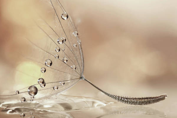 Drop Photograph - Prestige by Rina Barbieri