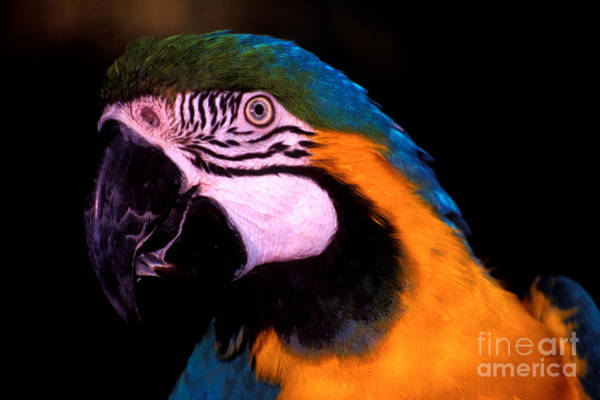 Photograph - Pretty Bird by Paul W Faust -  Impressions of Light