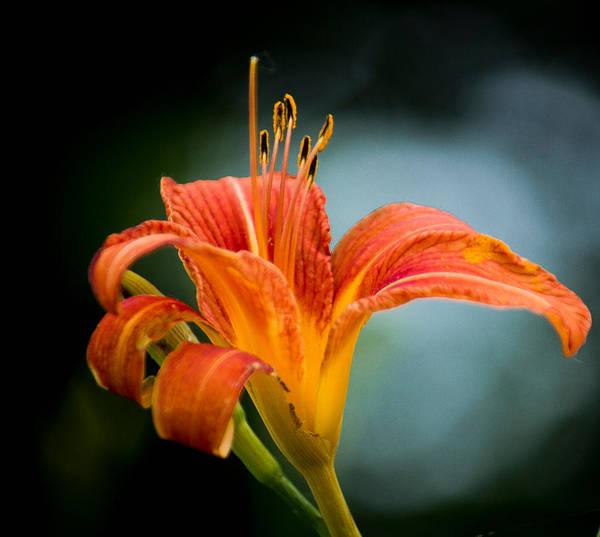 Photograph - Pretty Flower by Jorge Perez - BlueBeardImagery