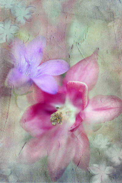 Photograph - Pretty Flowers by Annie Snel