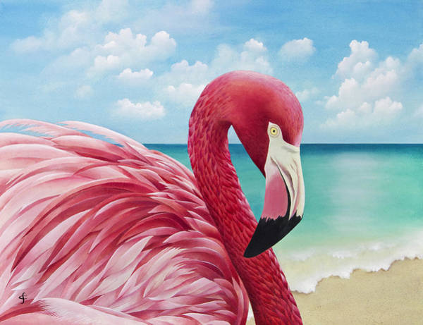 Flamingos Wall Art - Photograph - Pretty In Pink by MGL Meiklejohn Graphics Licensing