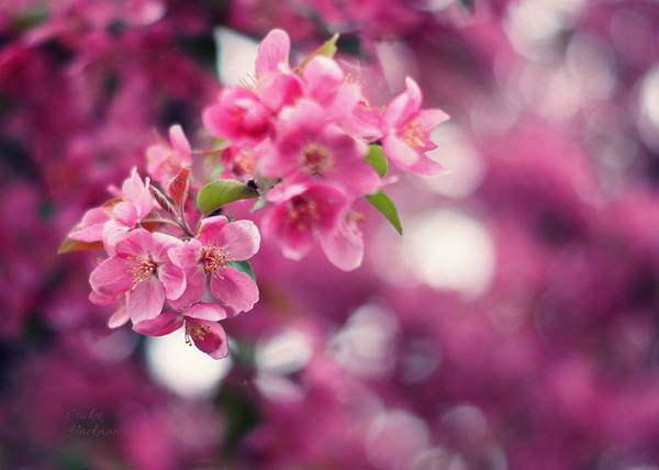 Photograph - Pretty In Pink by Cricket Hackmann