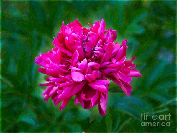 Photograph - Pretty In Pink Garden Art By Omaste Witkowski by Omaste Witkowski