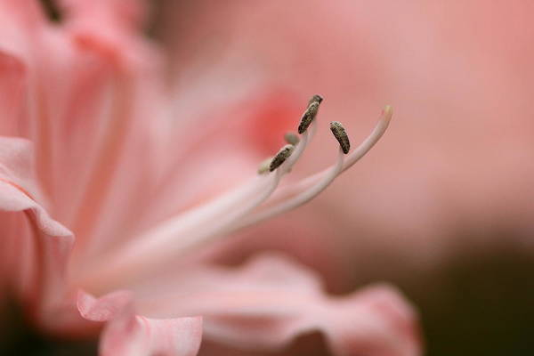 Photograph - Pretty In Pink by Jacqui Collett
