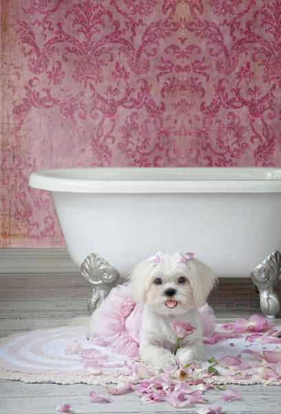 Doggy Wall Art - Painting - Pretty In Pink by MGL Meiklejohn Graphics Licensing