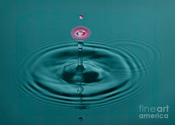 Photograph - Pretty Liquid Pink Hat by Susan Candelario